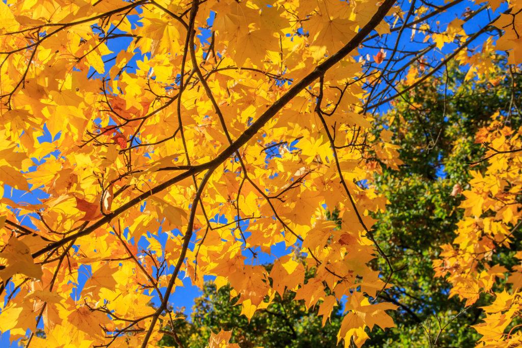 Herbstlaub • Großer Garten, Dresden